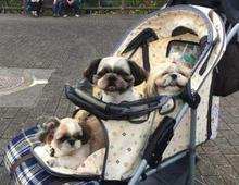 下次看到狗狗坐在小推车里,请别再问为什么了...