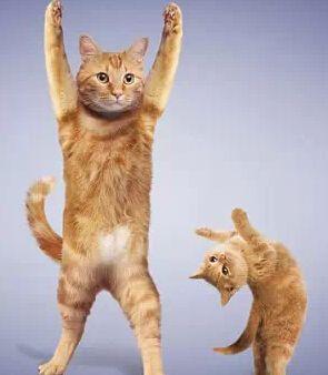 猛图:搞笑瑜伽