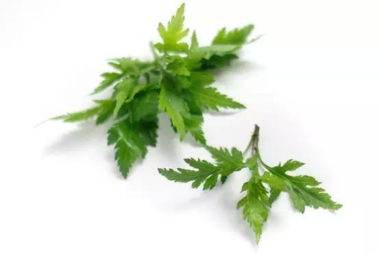 背景 壁纸 绿色 绿叶 盆景 盆栽 树叶 植物 桌面 555_370