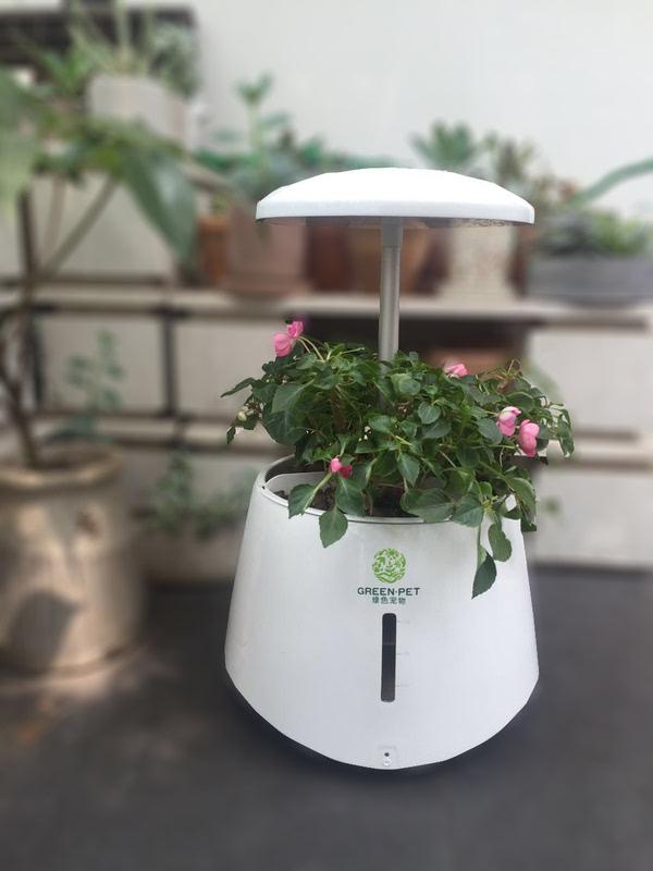 一键智懒人生美女绿宠,送给福利的植物-3生活照长机打包图片