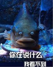 神吐槽:海的味道为啥贵 拿命换的图片