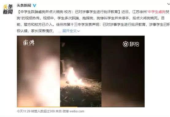 热点网神吐槽:徐州中学生虐狗,心理干预比批评教育更重要