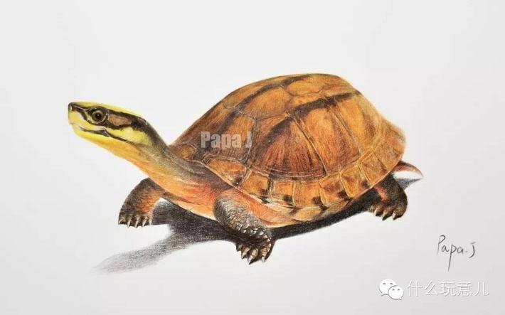 壁纸 动物 龟 昆虫 桌面 710_443