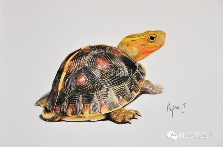 壁纸 动物 龟 710_469