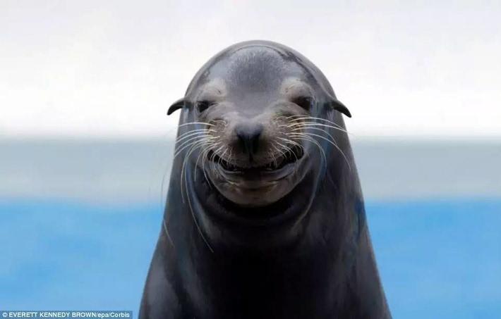 海豹君比起来    你们真的是不知道什么叫哈哈大笑    每日邮报上的