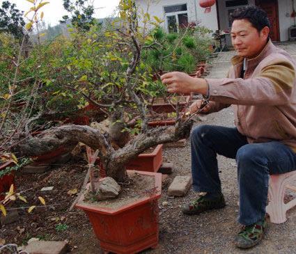 王庆龙正忙着给一盆景修枝造型,见到有人来访,他起身热情地招呼着客人