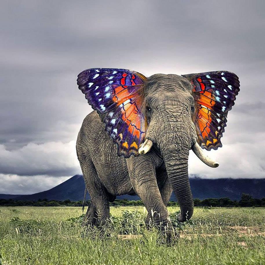 20个诞生于Photoshop中的杂交动物