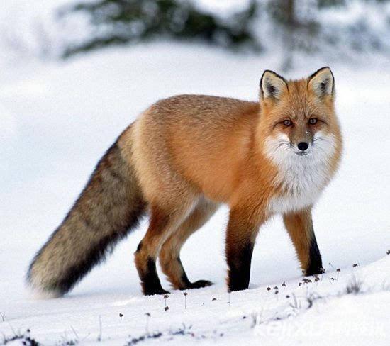冰雪世界十大美丽动物