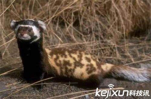 全球罕见32种珍稀动物 神话传说的真实原型
