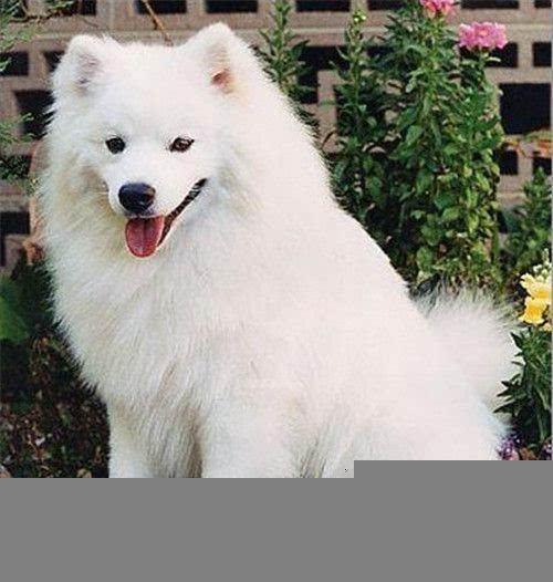 盘点世界上十大最可爱的狗狗