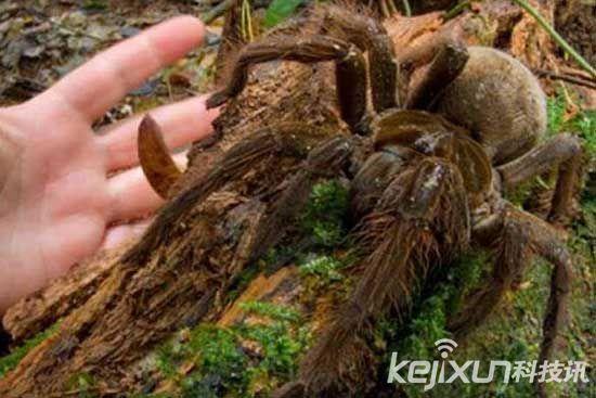 【科技讯】12月4日消息,小虫子往往会给人以麻麻酥酥的感觉,尤其是一些甲壳类昆虫,如果不小心落到身上或出现在眼前,绝对会让你头皮发麻,惊声尖叫。不过你是否想象过,如果这些小虫子的体型放大一倍甚至数倍,你还会有那么大的恐惧感么?或者会变的更害怕了?   1.泰坦甲虫