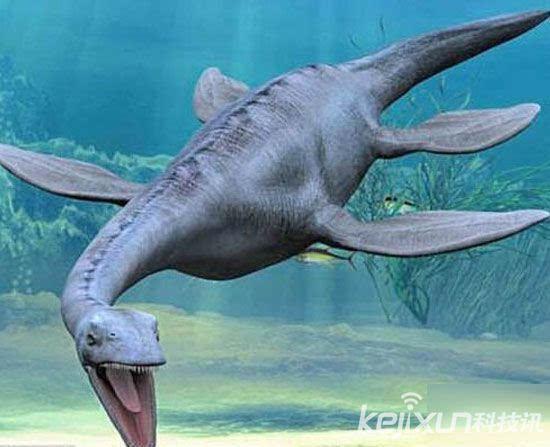 史前乌贼,史前神秘的深海动物