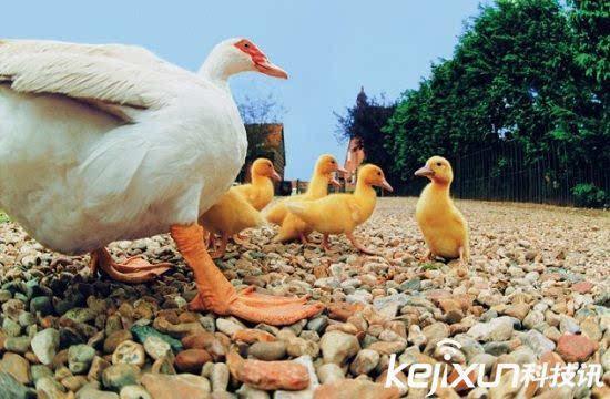 十大可爱的动物杀手 可爱的外表下竟残酷的嗜食同类