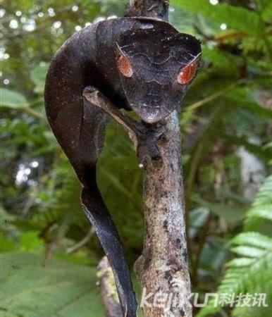 盘点:动物世界十大奇异濒危新物种