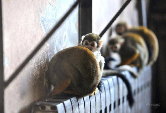公园动物抱暖气御寒