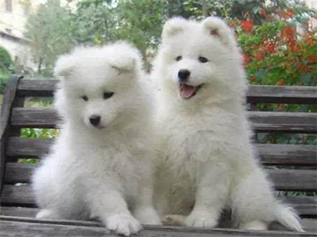 史上最可爱的小动物