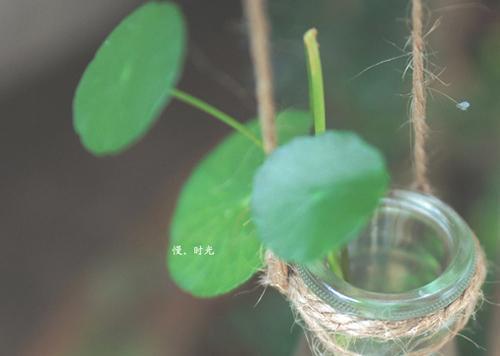 唯美可爱的小清新植物