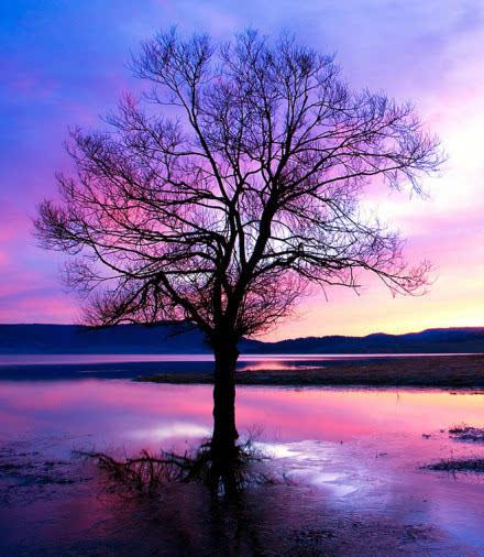 阳光之下 唯美大树