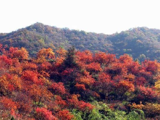 对的风景——看万山红遍层林尽染