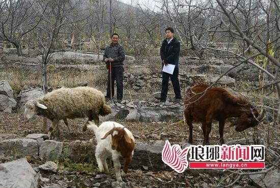 沂蒙山区野生动物