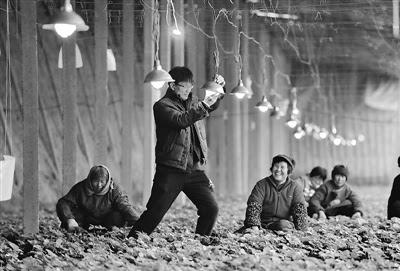 河北农村新时尚 :农家建起博物馆 屋顶电站