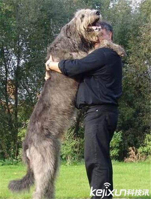 全球十大最可爱宠物狗评比