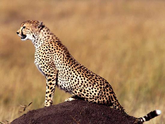 以动物的名字给汽车命名也十分常见