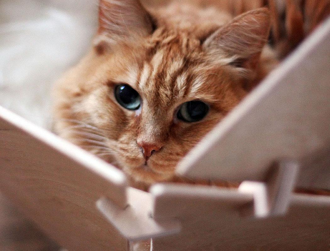 壁纸 动物 猫 猫咪 小猫 桌面 1050_799