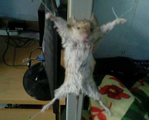 大妈抓老鼠审问有无同伙 萌翻网友