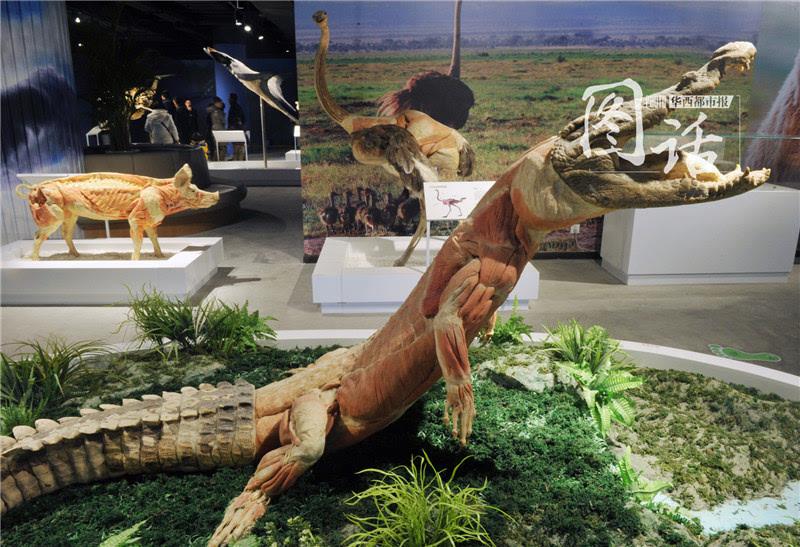 看到这些栩栩如生的动物标本你能说出它们的名字吗?