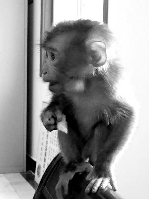 纸杯手工制作小猴动物