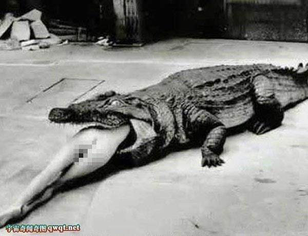 历史上最凶猛的动物