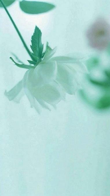 人生总不过是一朵花开的际遇,从陌上花开到陌上花落,从旭图片
