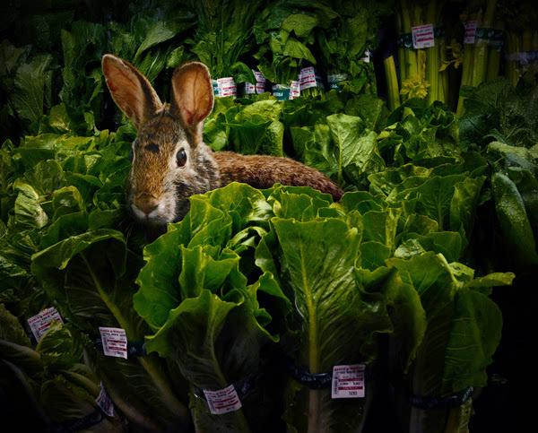 你有没有这样的经历:走在食品店的过道中,同一只与你注视着同一包肉食品的老虎面对面?估计没人有这样的经历。但是,在摄影师Agan Harahap拍摄的一系列真实摄影作品《Garden Fresh》中,你可以看到诸如此类的很多场景。   在《Garden Fresh》中,你可以看到不同种类的动物随意穿梭于超市中的各个区域,就好像它们正在为晚餐采购食材一样。   这位来自印度尼西亚的摄影师说,动物闯入人类的生活就好像童话故事一样。以前,动物总是被人类用来赋予寓言、讽刺小说或诗文中的形象和意义。这样一个作