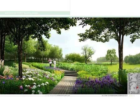 景观植物手绘卓越