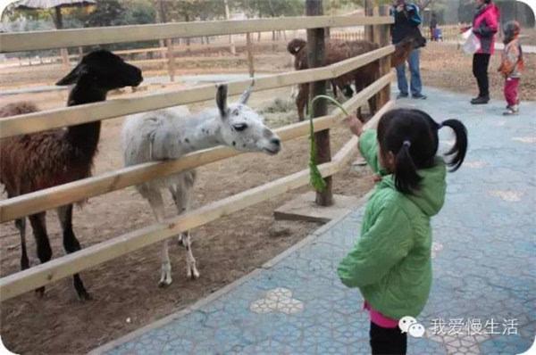 您带萌娃去过济南野生动物世界吧!