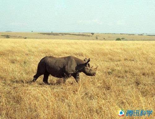 已经灭绝的动物物种