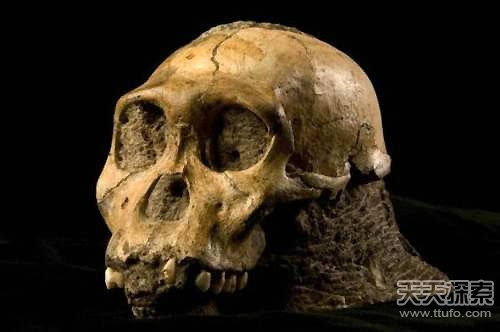 远古动物大揭秘:史前巨蟒竟能吞恐龙