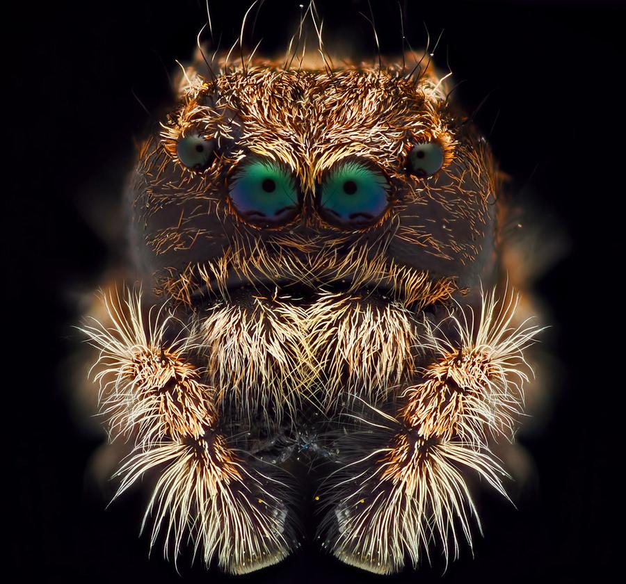 动物摄影:小昆虫大脑袋