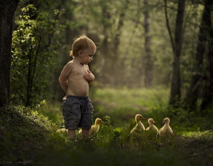 动物母爱摄影作品图片