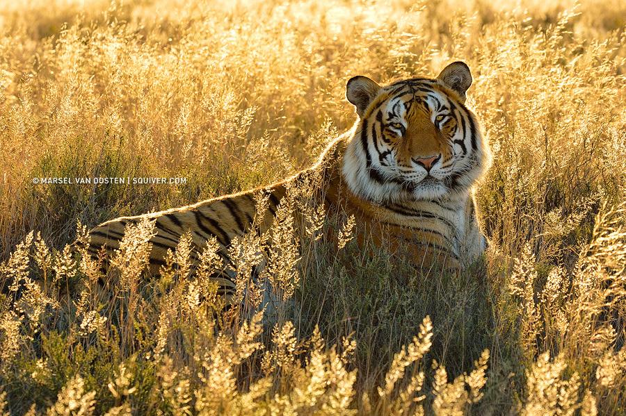 http://mt.sohu.com/20160207/n437095106.shtml mt.sohu.com true 摄影巴士 http://mt.sohu.com/20160207/n437095106.shtml report 5340 野生动物是最难拍摄的题材之一,不仅要求摄影师拥有优秀的摄影技巧,还需要等待时机。动物们行动迅速,难以捕捉,拍摄机会稍纵即逝。而且野生动物具有一定的危险性,摄影师