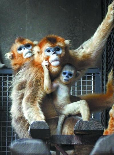 9点多钟,北京动物园里游客多起来.