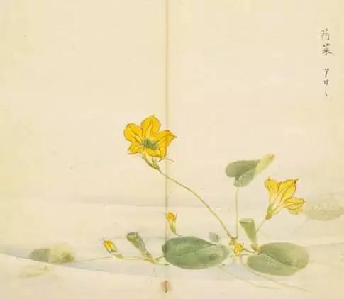 含有植物名称的古诗