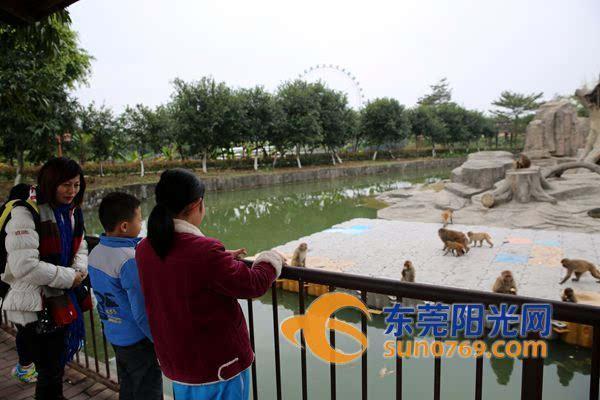 寮步:猴年春节6万多市民来香市动物园赏猴