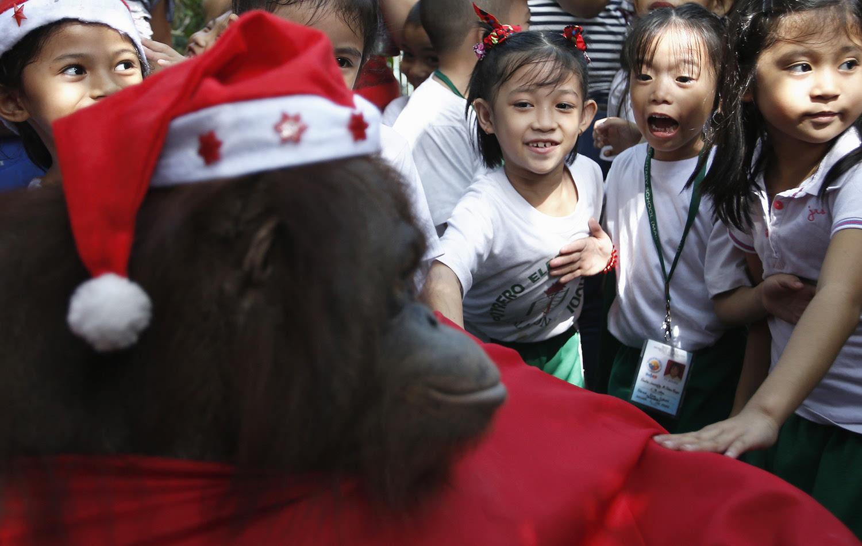 大猩猩也穿上了圣诞老人的衣服