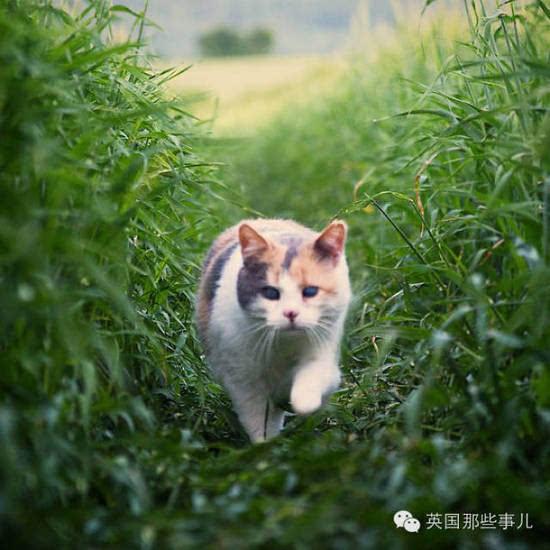 一样的小动物能拥有第二次生命