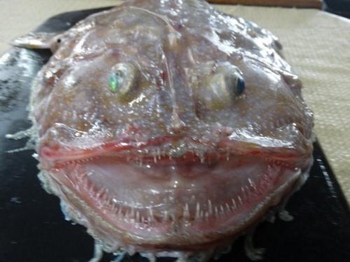 澳大利亚发现奇怪深海生物