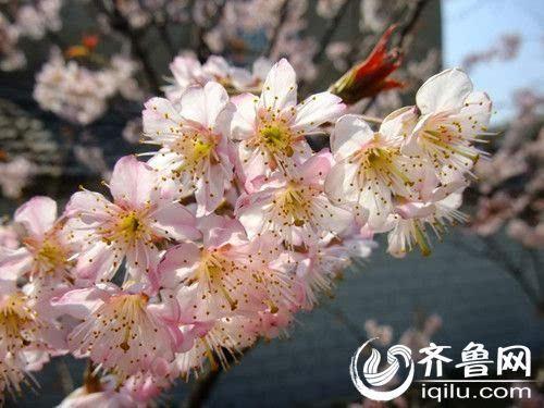 关键词:广州春季赏花小孩春季最牛赏花景点青从上海带攻略去青岛攻略攻略图片