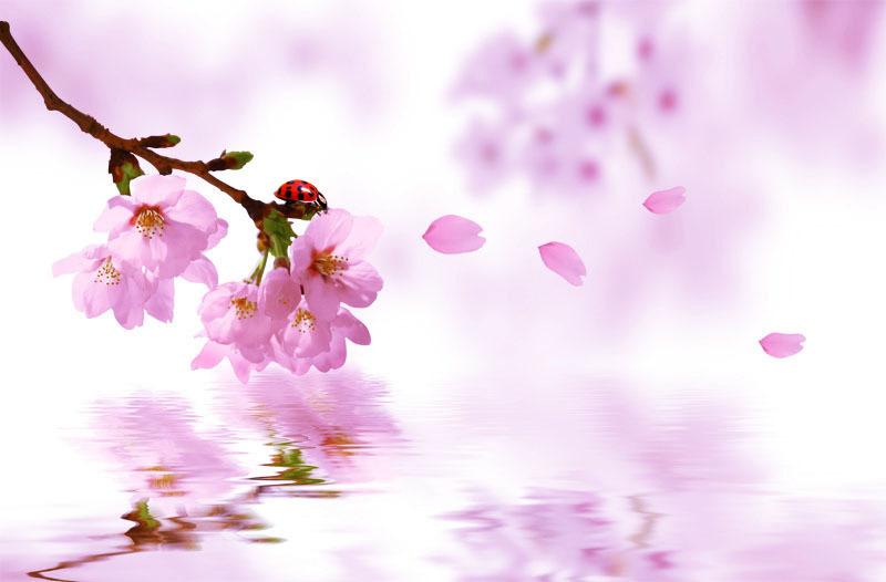 儿童手工制作春天 桃花处处开,图片尺寸:500×750,来自网页:http