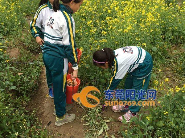 桥头小学生志愿者莲湖捡垃圾美环境图片